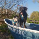 Hunde am Main Kulmbach