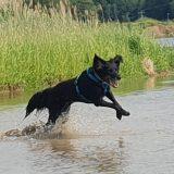 Spaß mit Hund im Wasser