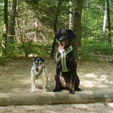 Trimm dich Pfad Kulmbach Hund