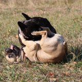 Spielende Hunde Kulmbach