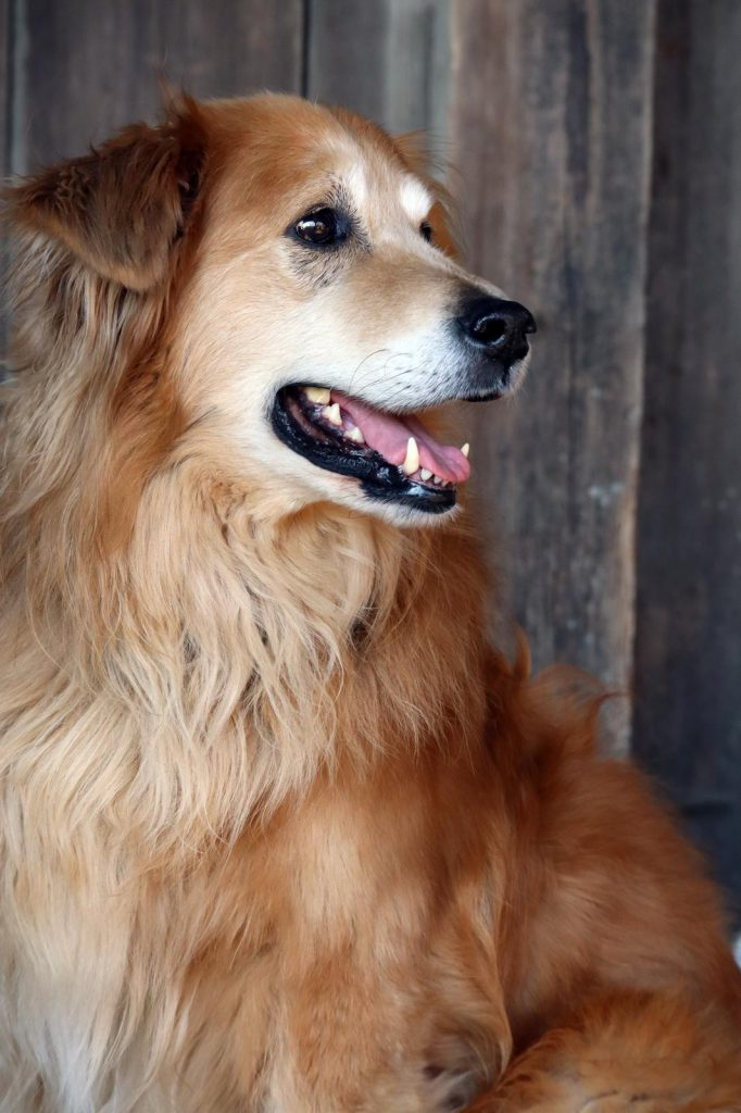 Aufmerksammer Hund Kulmbach