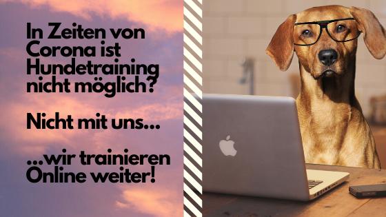 Online Hundetraining Leidenschaft-Hund