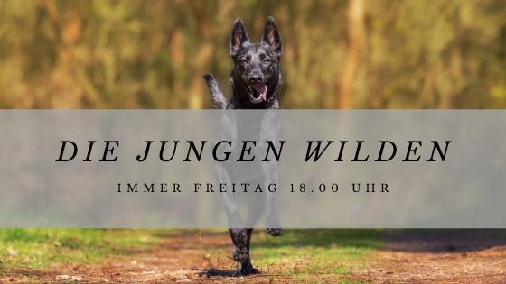 Junge Hunde Kulmbach