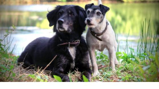Aus dem Leben von zwei Trainerhunden