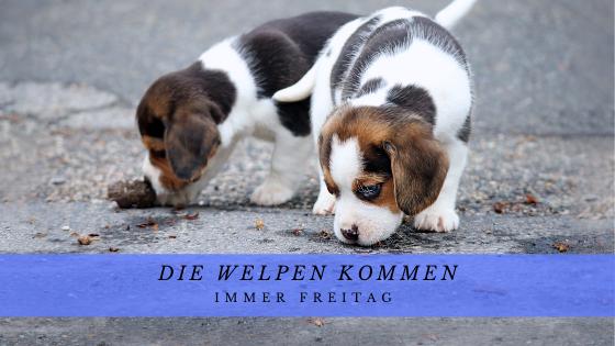 Welpengruppe Kulmbach