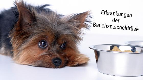 Bauchspeicheldrüse Hund