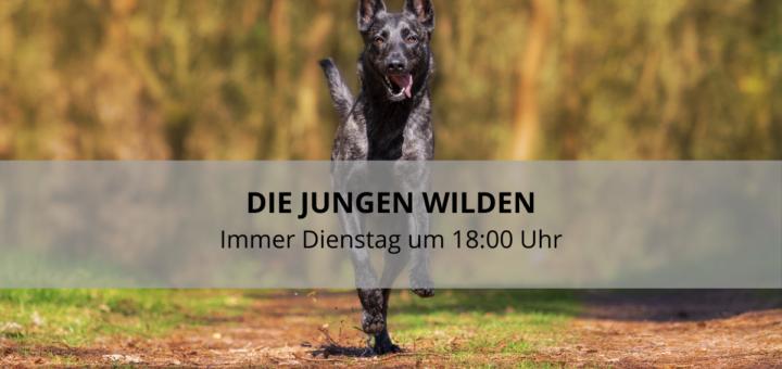 Junghund Kulmbach