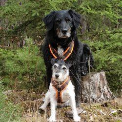 Hunde in der Natur Kulmbach