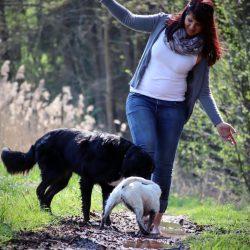 Dogwalker Kulmbach