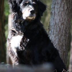 Hund Kulmbach