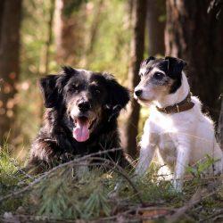 Basics Leidenschaft-Hund Kulmbach